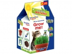 Grass for cats (mixed)